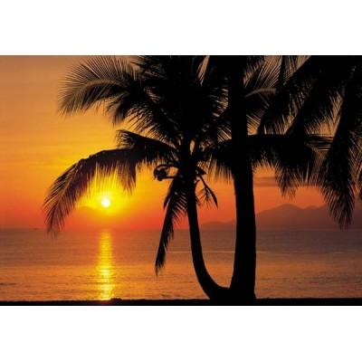 Fotomural PALMY BEACH SUNRISE