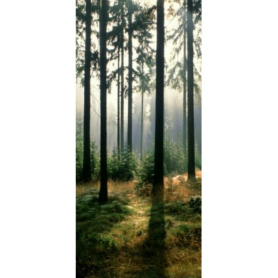 Fotomural FOREST IN THE MORNING 97599