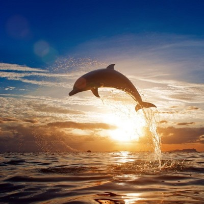 Fotomural Delfin FAN007