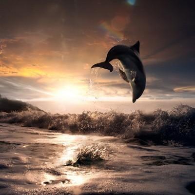 Fotomural Delfin FAN010