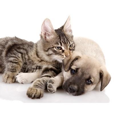 Fotomural Cão e Gato FAN014