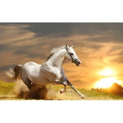Fotomural Cavalo FAN015