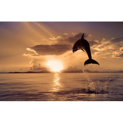 Fotomural Delfin FAN018