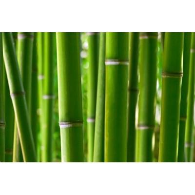 Fotomural Bambu
