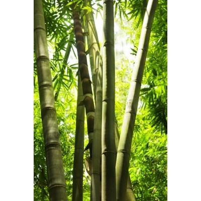 Fotomural Floresta de bambu FNA005