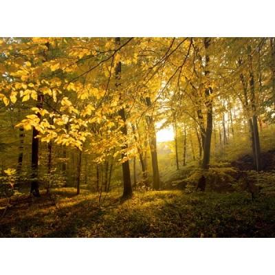Fotomural Bosque no Outono FNA010