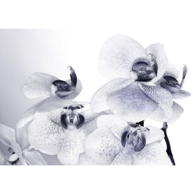 Fotomural ORCHIDS