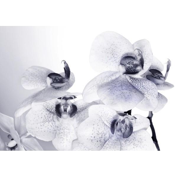 Fotomural ORCHIDS