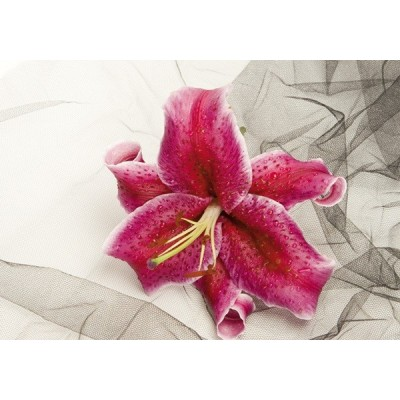 Fotomural LILY RED FT-0378