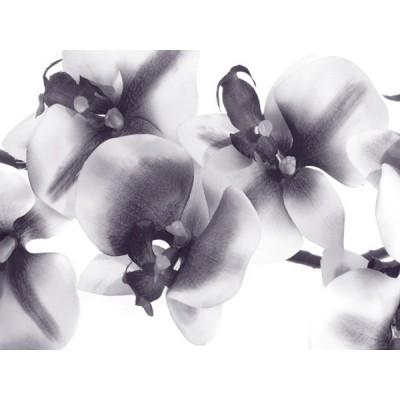 Fotomural ORCHIDS FT-1415