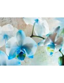 Fotomural BLUE FLOWERS FT-1433
