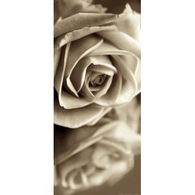 Fotomural Sepia Rose FTV1508