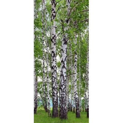 Fotomural Birch's Wood FTV1510