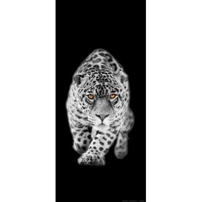 Fotomural Leopard FTV1511