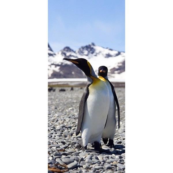 Fotomural Penguin FTV1521