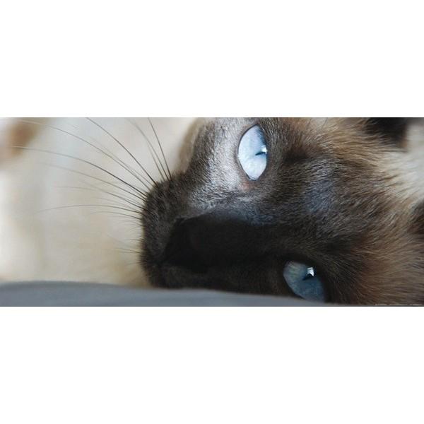 Fotomural CAT