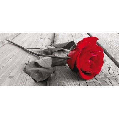 Fotomural RED ROSE