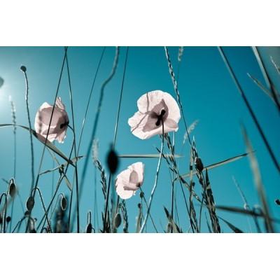 Fotomural Amapolas Blancas FFL002