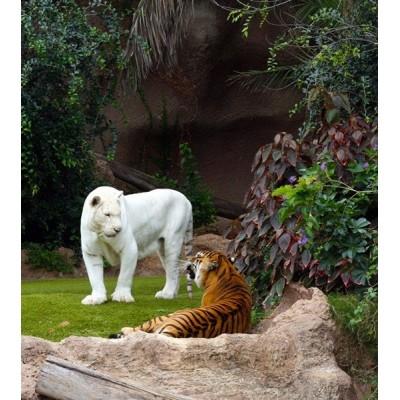Fotomural WHITE TIGER FTL-1625