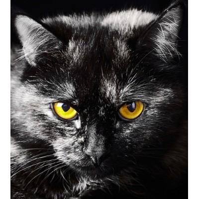 Fotomural BLACK CAT FTL-1605