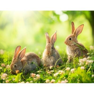 Fotomural Conejos FAN026