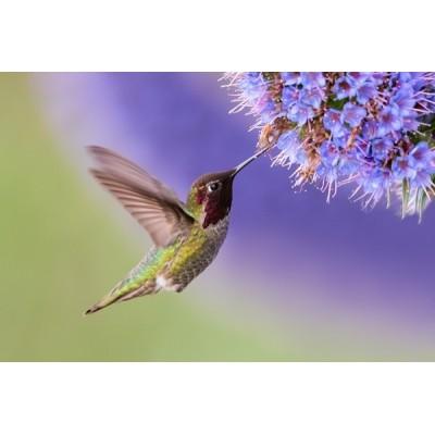 Fotomural Pájaro FAN028