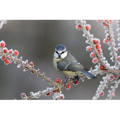 Fotomural Pássaro FAN028