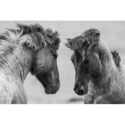 Fotomural Cavalo FAN030