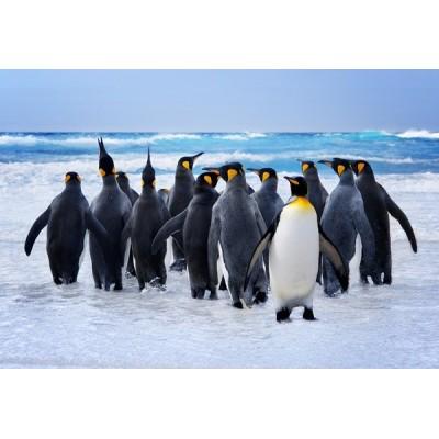 Fotomural Pingünos FAN033