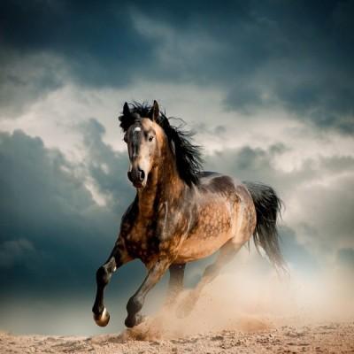 Fotomural Cavalo FAN035