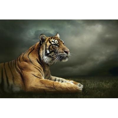 Fotomural Tigre FAN037