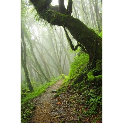 Fotomural Bosque Niebla FPR032