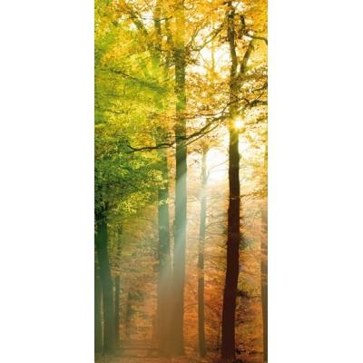Fotomural FOREST LIGHTS MTB-0054