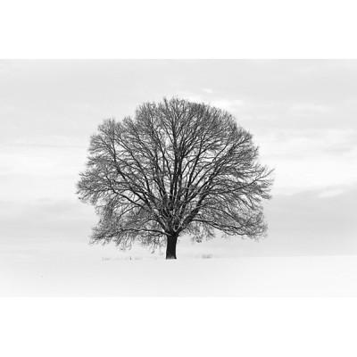 Fotomural TREE B001