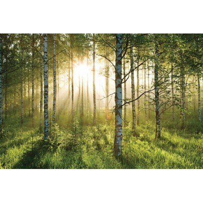 Fotomural FOREST A003