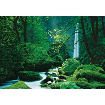 fotomural BLACK FOREST