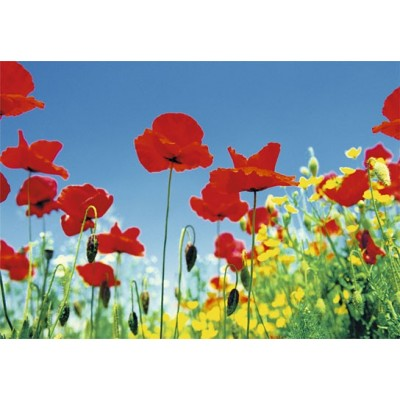 Fotomural POPPY FIELD