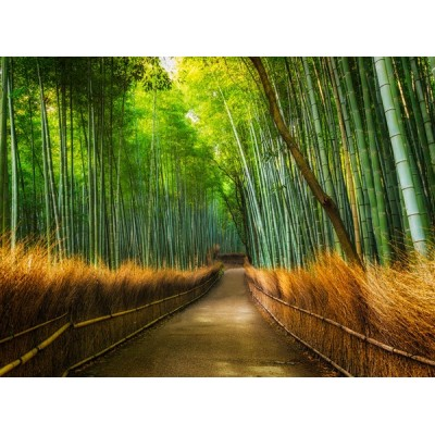 Fotomural W4PL BAMBOO 001