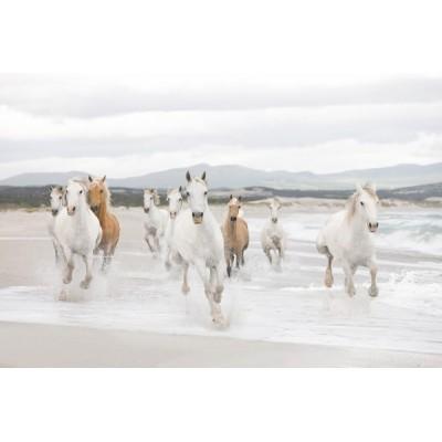Fotomural WHITE HORSES