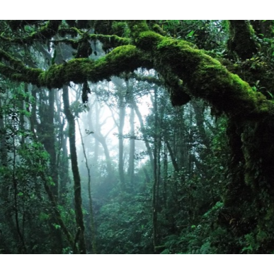 Fotomural Bosque Tropical FPR028, 293cm. x 250cm., Vinilo Autoadhesivo Mate, Todo Color, Invertir, 20.8x0x21.52x0 cm.