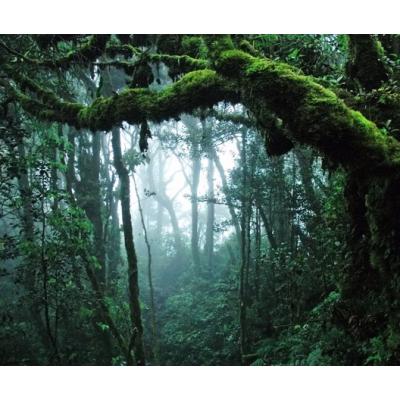 Fotomural Bosque Tropical FPR028, 292cm. x 242cm., Vinilo Autoadhesivo Mate, Todo Color, Invertir, 5.88x0x28.92x0 cm.