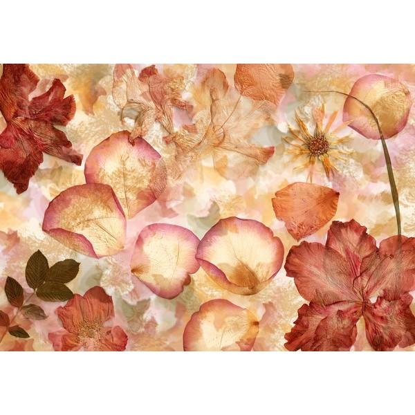 Fotomural DRIED FLOWERS