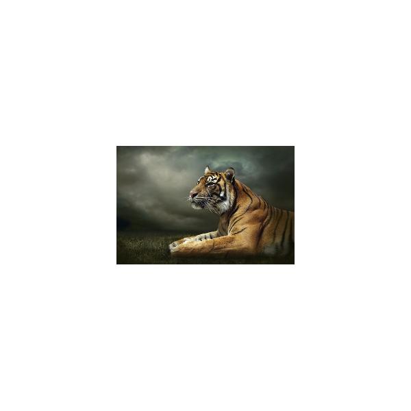 Fotomural Tigre FAN037, 195cm. x 130cm., Vinilo Autoadhesivo Mate, Todo Color, Invertir, 0x0x0x0 cm.