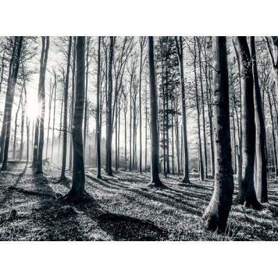 Fotomural W4PL FOREST 004