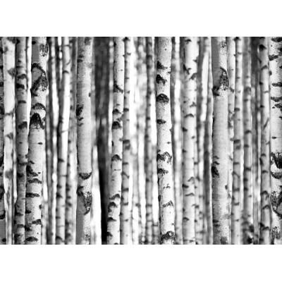 Fotomural W4PL FOREST 005