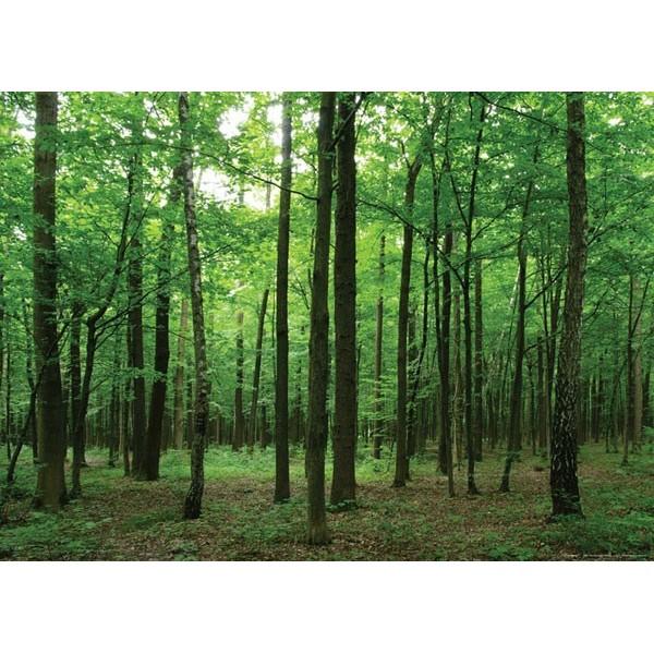 Fotomural FOREST