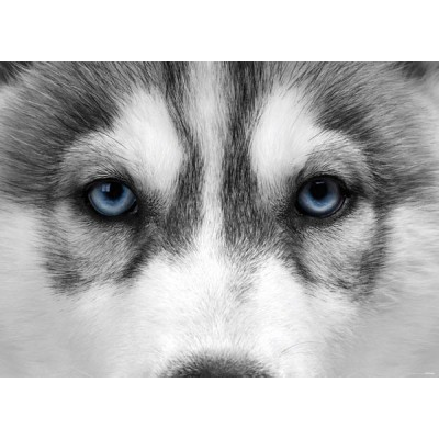 Fotomural WOLF