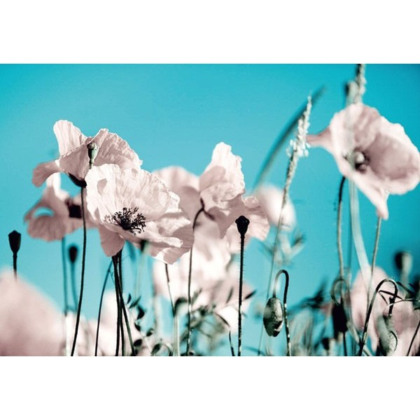 Fotomural POPPPIES ON BLUE
