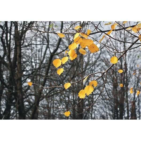 Fotomural AUTUMN LEAVES