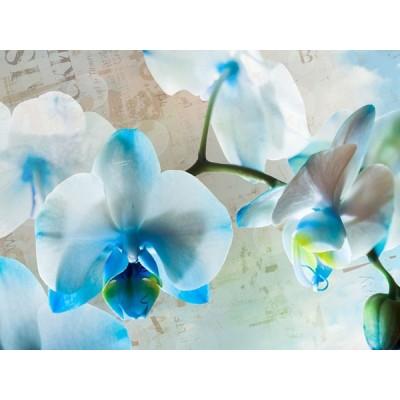 Fotomural BLUE FLOWERS